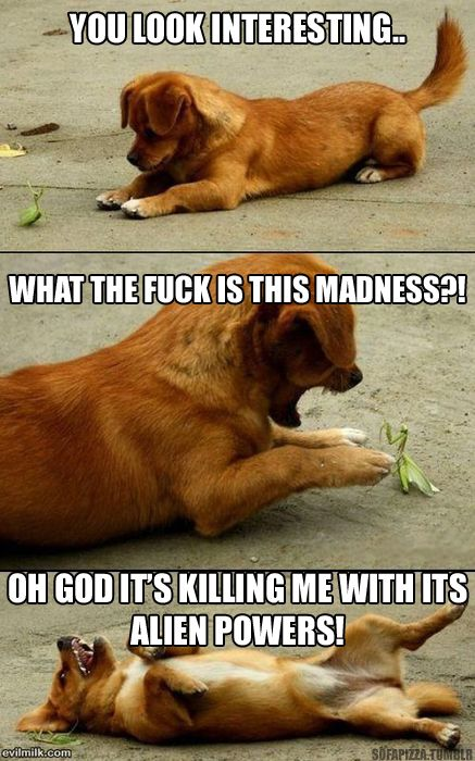 Too funny!: Animals, Dogs, Stuff, Puppys, Funnies, Things, Funny Animal, Praying Mantis