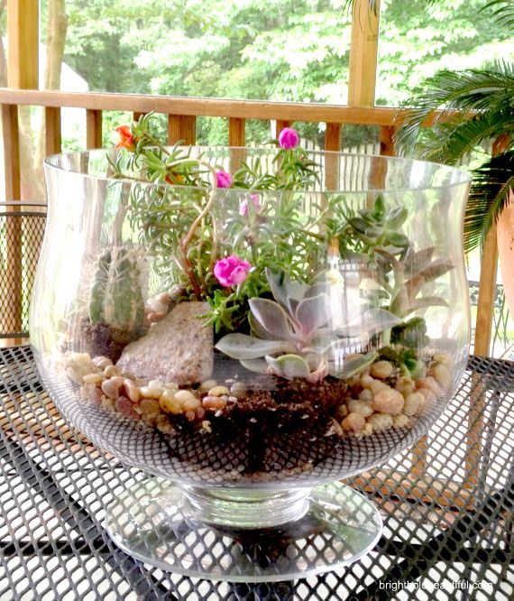 Watch this #DIY Step by Step Video Tutorial on How To Make a Succulent Garden for your Home.: Succulents Garden, Garden Ideas, Flowering Succulents, Gardens, Terrarium, Diy Projects