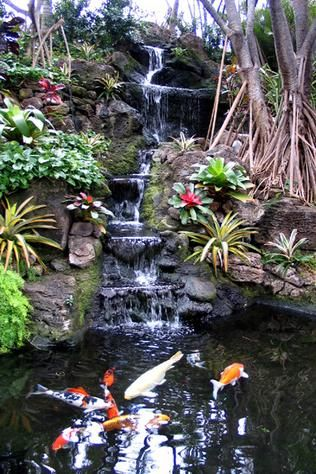 Waterfall into Fish Pond, it takes time to create this masteriece,but when u r complete, Your Home is changed forever: Flowers Gardens Ponds, Garden Fountains Ponds, Beautiful Koi, Beautiful Waterfall, Koi Ponds, Koi Fish Pond, Ponds Waterfalls, Ponds Wat