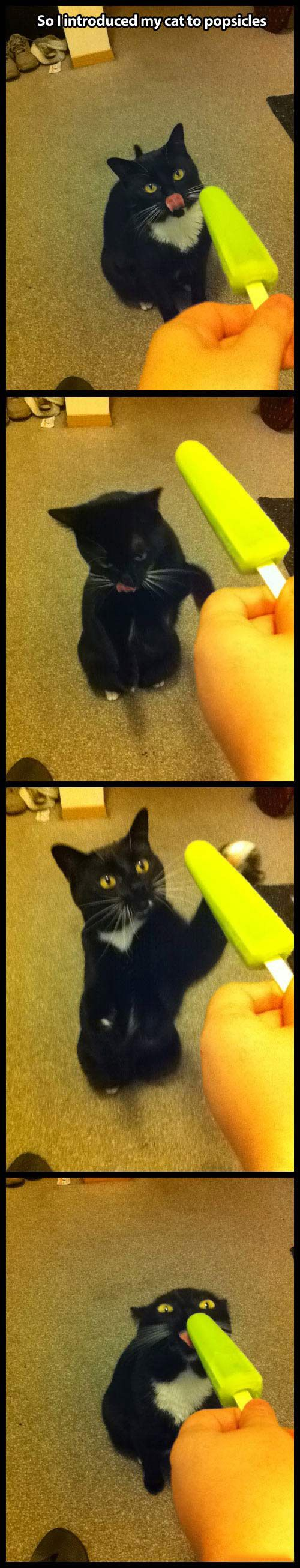 When you give a cat a Popsicle . . .: Funny Animals, Picture, Cats, Cat Face, Kitty Cat, Funny Cat, Cat Love, Crazy Cat