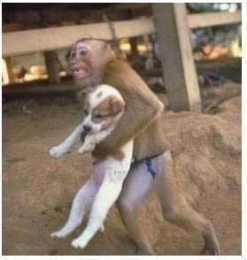 """""""During a dangerous factory explosion that occurred in china, a monkey was recorded on the camera saving a puppy from the explosion site. he held the dog as he ran out of the factory.  if animals can instinctivley show compassion and kindness to each"""