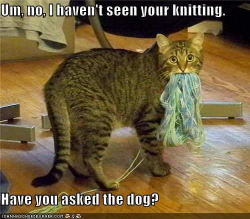 """""""I don't know how this got here!"""": Cats, Animals, Funny Cat, Knitting, Funny Stuff, Funnies, Funny Animal, Dog, Kitty"""