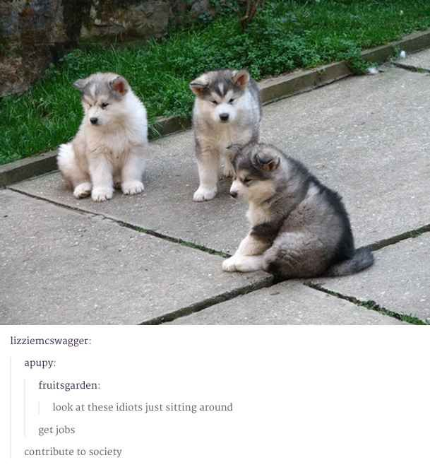 48 Times Tumblr Was Funny About Animals: Puppies, Animals, Dogs, Stuff, Pet, Malamute, Funny, Puppys, Husky