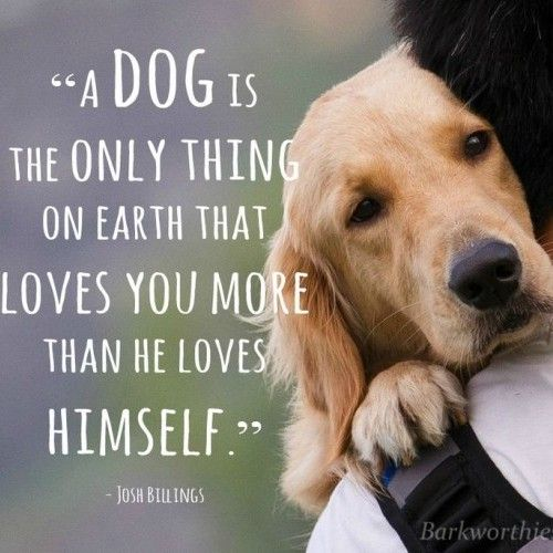 A dog is the only thing on earth that loves you more than he loves himself: Dogs, Love You, Quotes, Pet, So True, Friend, Animal, Golden Retriever