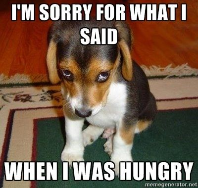 """Awee honey, how could anyone hurt animals? It would take a true """"Animal"""" to ever abuse them.: Face, Animals, Dogs, Pets, Funny, Puppys, Puppy, Beagle"""