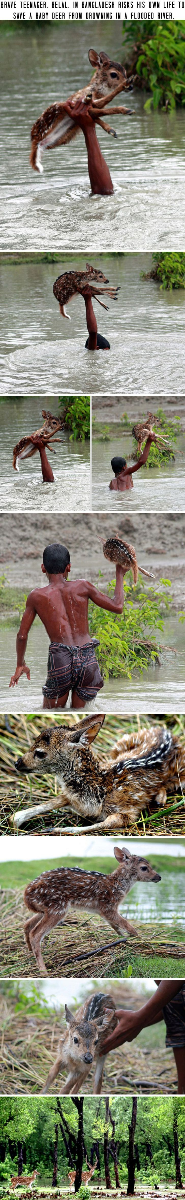 Brave teenager, Belal, in Bangladesh risks his own life to save a baby deer from drowning in a flooded river.: Deer Faith, Baby Deer, Help Animals, Aaaawwww Baby, Freakin Awesome, Faith In Humanity Restored, Faith Restored