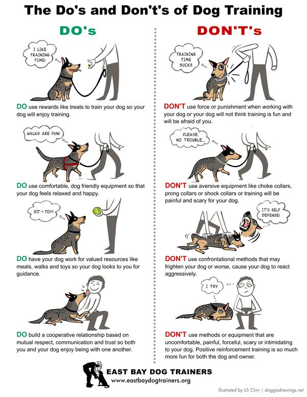 Dog Training Methods to Do and Not to Do. Posted at http://www.bterrier.com/dog-training-methods-to-do-and-not-to-do/: Dogs Training, Dogsdogsdogsdogs Dogs, Don T, Train Dog, Dogs And Puppies Training, Animal