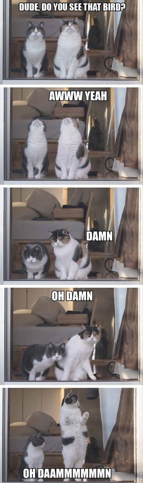 Funny Cat Pictures - 20 Pics: Animals, Giggle, Funny Cats, Funny Pictures, Funny Stuff, Funnies, Humor