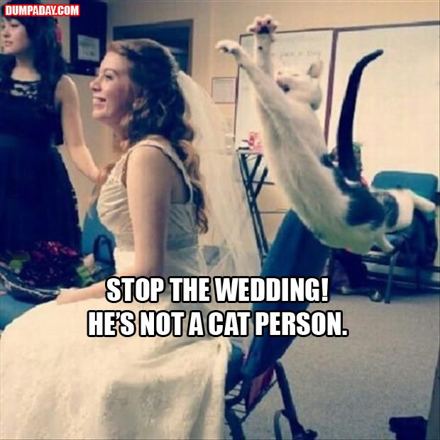 Funny: Cats, Photobomb, Animals, Weddings, Funny Picture, Funny Stuff, Funnies