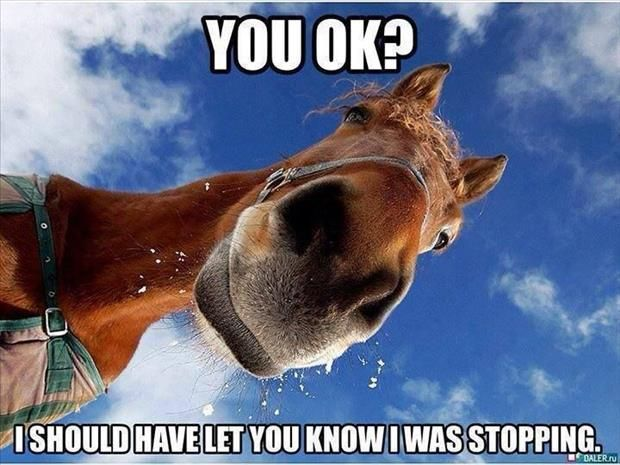 Funny Pictures Of The Day – 67 Pics: Animals, Horses, Funny Stuff, Funnies, Humor, Funny Animal