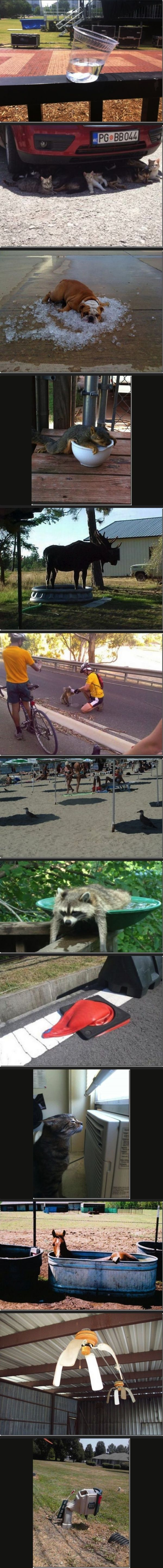 Funny Pictures of the week -71 pics- You Know It's Hot When ... (Compilation): Giggle, Funny Pictures, Summer, Funny Stuff, Humor, Smile, Animal