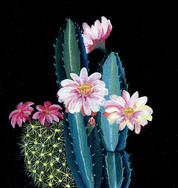 Glicee print Cactus and  flower illustration by artandpeople, $21.00: Cactus Art, Cactus Flowers, Flower Illustrations, Illustrations Journals, Illustrations Design Art, Cactus Blossoms