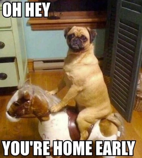 Haha!   ...........click here to find out more     http://googydog.com: Animals, Dogs, Horse, Funny Stuff, Funnies, Funny Animal