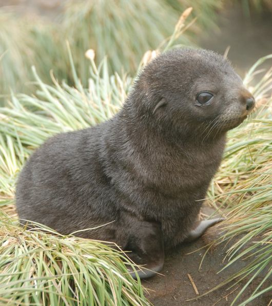 I know not what you are, but I will find you, and I will... HUG YOU AND SQUEEZE YOU AND TAKE YOU HOME AND CALL YOU GEORGE!!!: Babies, Seals, Sea Lions, Adorable, Baby Animals, Baby Seal