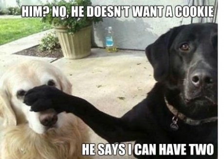 I love the blond dog's face!!!!: Cookies, Animals, Dogs, Pet, Funny Stuff, Funnies, Funny Animal