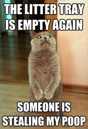 If this was my cat, I would say it was my dog stealing the poop!: Cats, Animals, Funny Cat, Funny Stuff, Funnies, Humor, Funny Animal