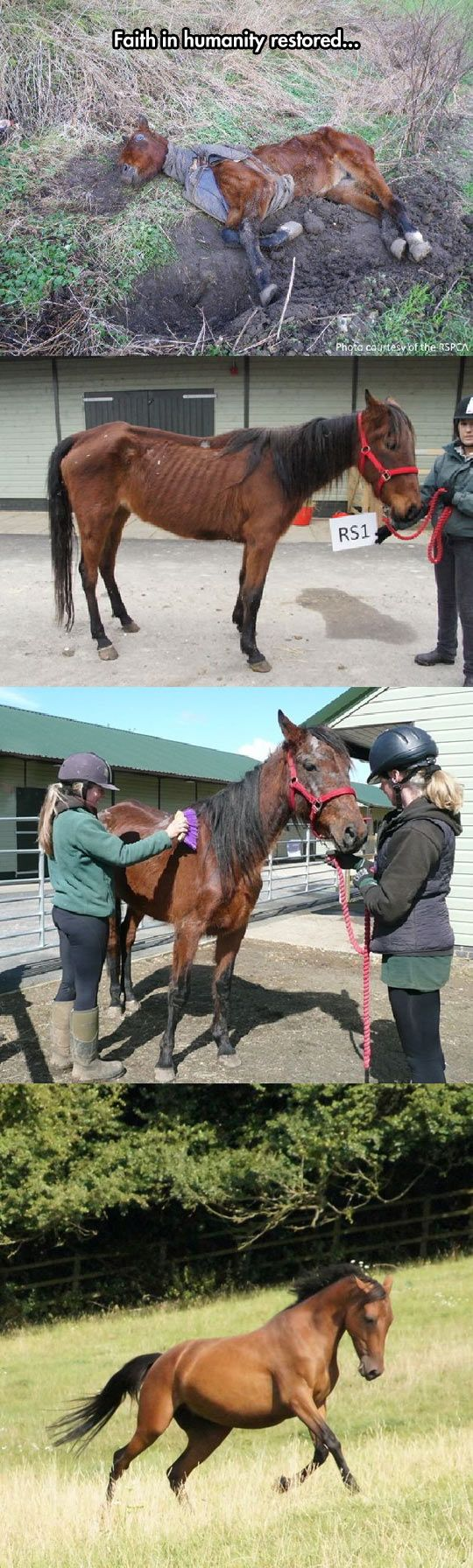 Little Survivor Finds A Home // tags: funny pictures - funny photos - funny images - funny pics - funny quotes - #lol #humor #funnypictures: Beautiful Horses, Help Animals, Humanity Restored, Horse Deserves, Faith In Humanity, Survivor Finds, People Savin