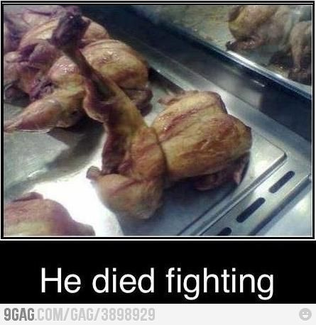 """LMAO. The Bravest """"Dead"""" Chicken of all time.: Chicken, Kung Fu, Funny Stuff, Died Fighting, Humor, Funnies, Funnystuff"""