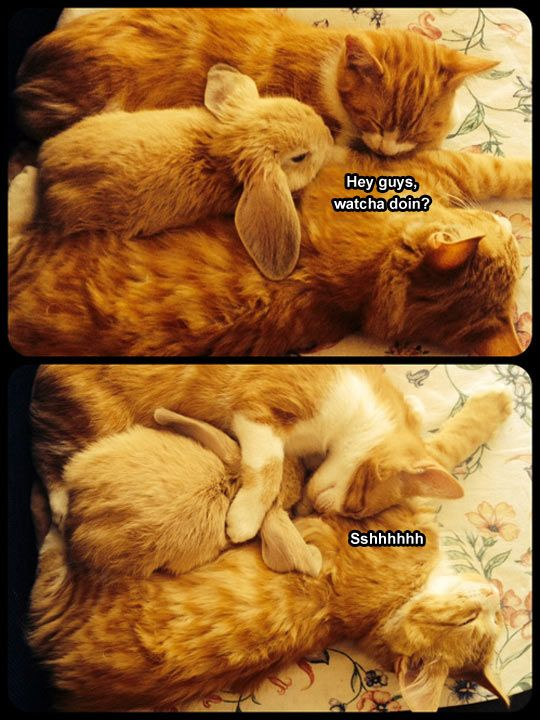 Make some space: kitties and. bunny! So cute: Cats, Animals, Friends, Sweet, Bunny, Pet, Adorable, Funny Animal, Bunnies