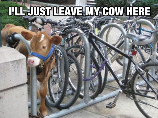 Meanwhile At Veterinary School: Animals, Bike, Cow, Funny Stuff, Funnies, Humor, Photo