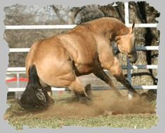 natural reiner...but people say horses dont love their jobs