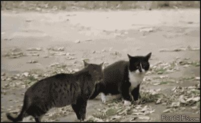 Not on my lawn  -Dog: Animals Gifs, Funny Gifs, Funnycat Gifpicture, Funnies, Cats Dogs, Stop It, Dags Cats Gifs