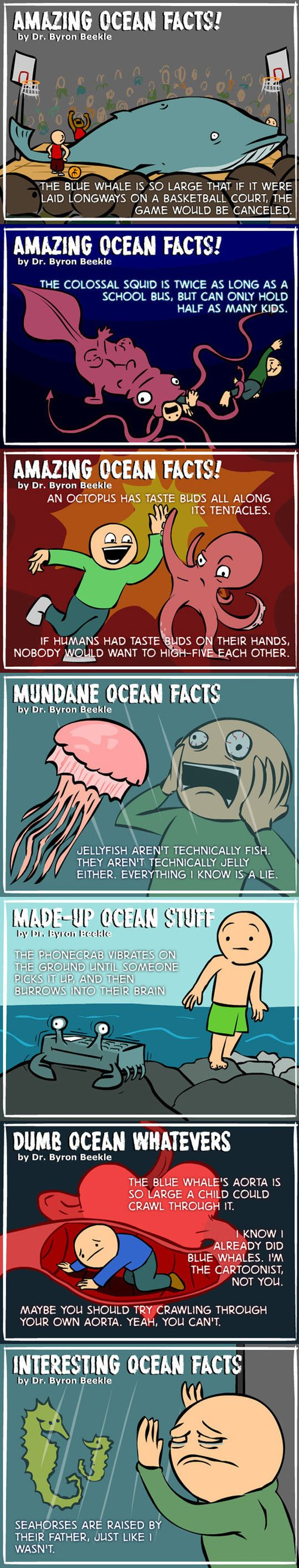 Ocean facts you probably don't know...: Amazing Ocean, Giggle, Funny Pictures, Fun Facts, Funny Stuff, Ocean Facts, Funnies, Humor