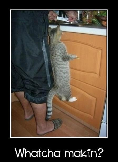 oh yeah!!!: Cats, Animals, Funny Cat, Pet, Whatcha Makin, Funnies, Kitty