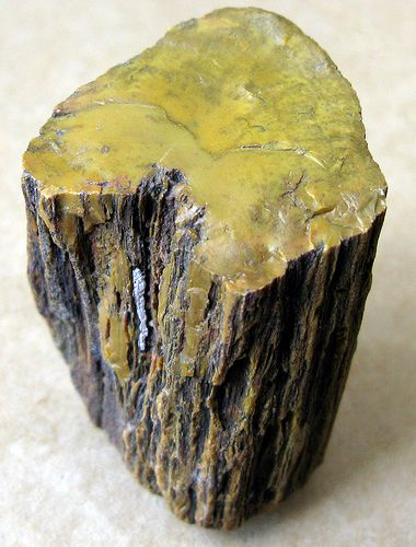 Petrified Wood from Arizona.: Rocks Fossils Minerals, Crystals Minerals Gemstones, Rocks Minerals, Gemstones Rocks, Petrified Wood, Fossils Plants, Rockhound, Photo