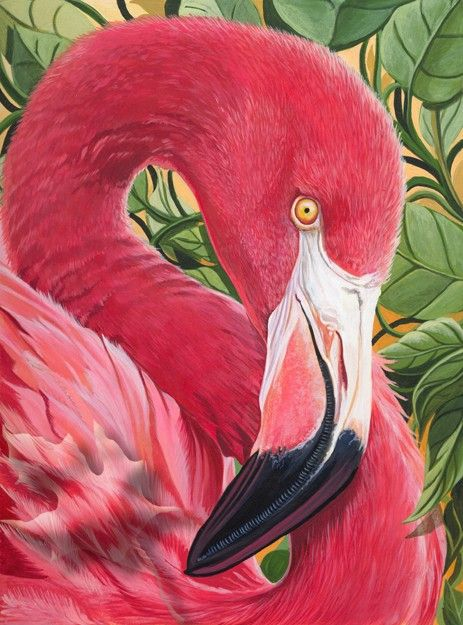 Research suggests that the tracking mechanisms in the retinas of this bird are extremely similar to that of a tarantula.: Flamingos ️, Rose, Flamingos Love Love Love, Fabulous Flamingos, Ducks Flamingos, Baby Animals, Art Animals Aquatic, Birds Flamingoes
