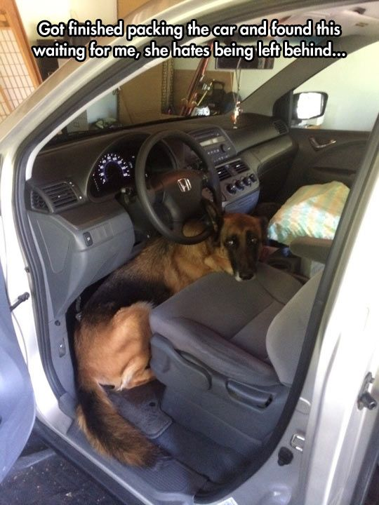 Smart Move, Dog...that is the cutest thing EVA, i love dogs, i'm not a cat person like most cats, i mean don't get me wrong i love cats , but dogs are my life: Car, Dogs, Funny Pictures, German Shepherds, Dump A Day, Leave Me, Animal