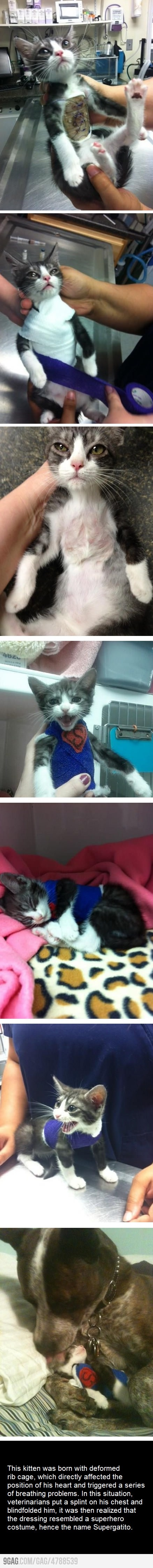 So cute.: Cats, Sweet, It S Supergatito, Poor Kitty, Baby, Dog, Animal
