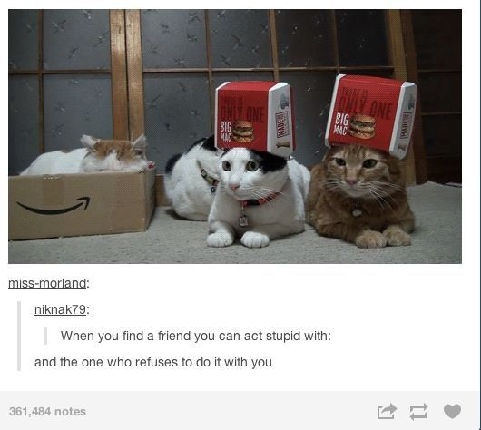 this applies to my friend group perfectly. (if you couldn't guess, I'm one of the nutty kitties): Real Life, Best Friends, Life Guys, So True, Hahahahahahahaha Awesome, Cats Stupid, Friends Summed, Humor Cats, Funny Tumblr Humor