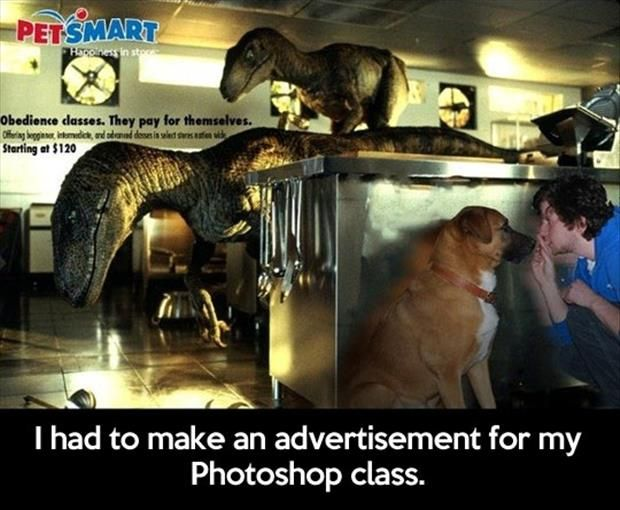 Uh Photoshop class? ?: Giggle, Funny Pics, Photoshop Class, Guy, Funny Pictures, Funny Stuff, Dog, Smile