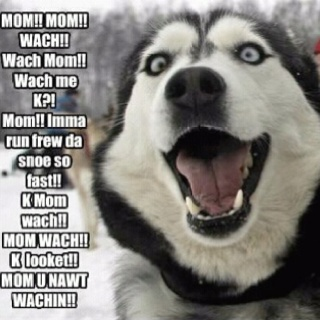 um yeah...that does about sum up Princess Pain in my ....!!!: Funny Animals, Cookies, Funny Dogs, Siberian Husky, Siberian Huskies, Funnies