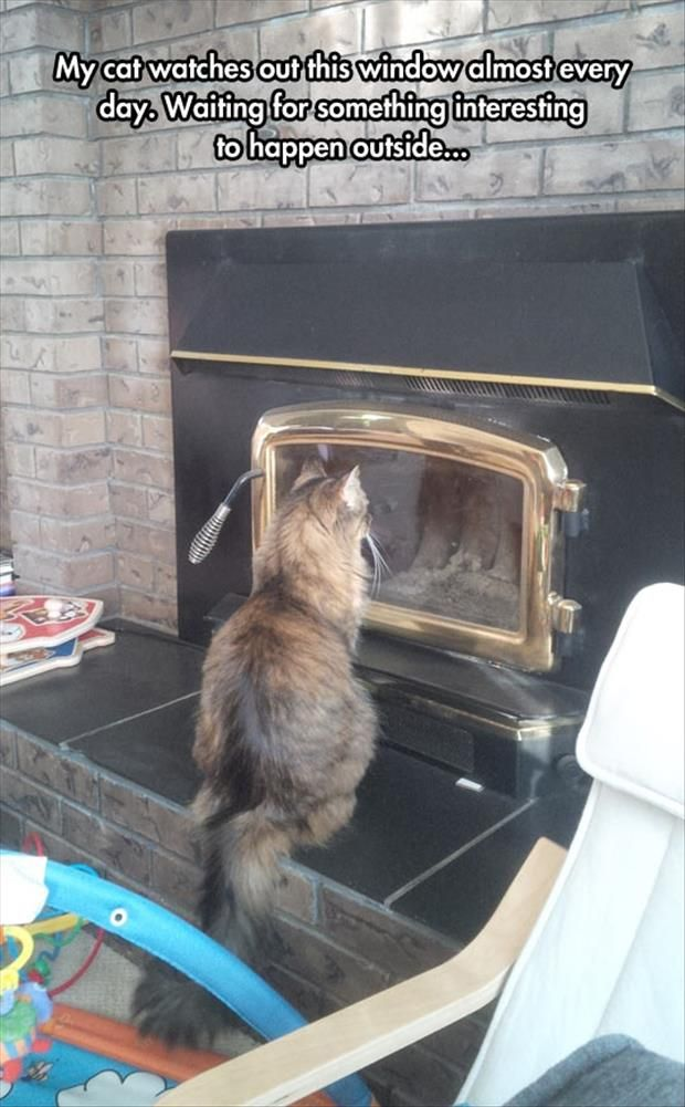 Waiting: Funny Animals, Cat Watch, Funny Pictures, Funny Cats, Crazy Cat, Funny Stuff, Funnies, Windows