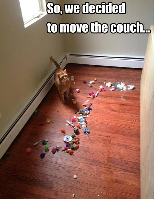 20 More Photos That Only Cat Owners Will Understand | FB TroublemakersFB Troublemakers: Cats, Animals, Couch, Funny Cat, Funny Stuff, Crazy Cat, Cat Lady, Funnie