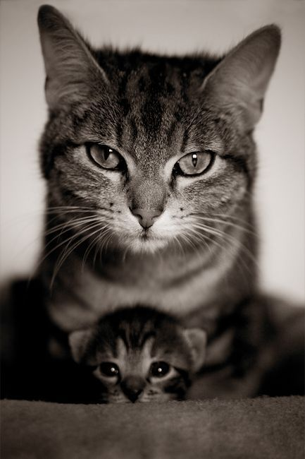 5 signs your cats loves you, mine loves me!!: Cats, Babies, Kitty Cat, Animals, Sweet, Mother, Pet, Kittens, Baby Cat