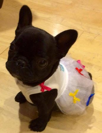 August 2014 Frenchie of the Month Contest! get more only on http://freefacebookcovers.net: Animals, Sweet, French Bulldogs, Frenchie Baby, Pet, Box, Friend