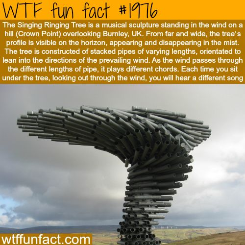 Awesome engneering of music - WTF fun facts: Bucket List, Wtf Facts, Wtf Fun Facts, Weird Facts, Interesting Facts, Funfacts, Awesome Engneering, Random Facts