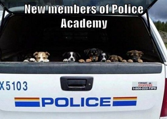 Awesome Funny Pictures with Captions (30 Photos): Animals, Puppies, Dogs, Funny Pictures, Funny Stuff, Puppy, Photo, Police Academy
