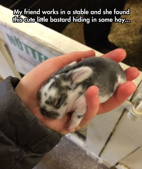 BABY: Babies, Chubby Baby, Animals, Chubby Babies, Baby Bunnies, Funny, Baby Rabbit, Photo