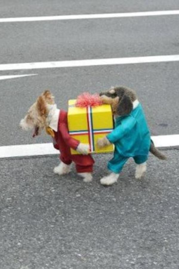 Best. Dog costume. Ever.   ...........click here to find out more     http://googydog.com: