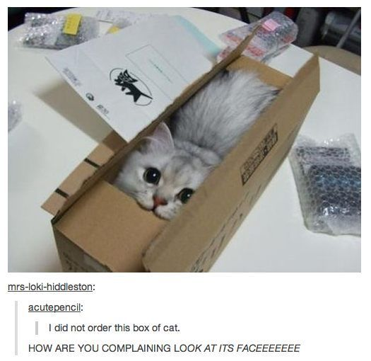 Box of cat. XD: Cats, Fit, Kitten, Animals, Boxes, Funny, Crazy Cat, Things, Kitty