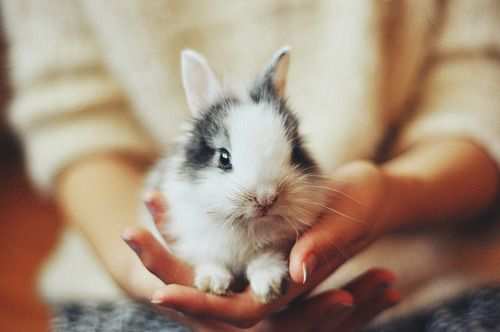 bunny: Adorable Animals, Creatures, Box, Things, Baby, Bunnies