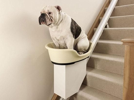 dog-stairs.jpg 550×414 pixels: Animals, Stair Lift, Dogs, Stairs, Pets, Funny, Dog Stair