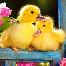 ducklings in garden  Leeny: Writing is an intimate experience for me, as I reveal my inner reality and tap into the deep wisdom that resides within me. I now offer my truth as a source of comfort for people all over the world.: Ducklings, Animals, Sweet,