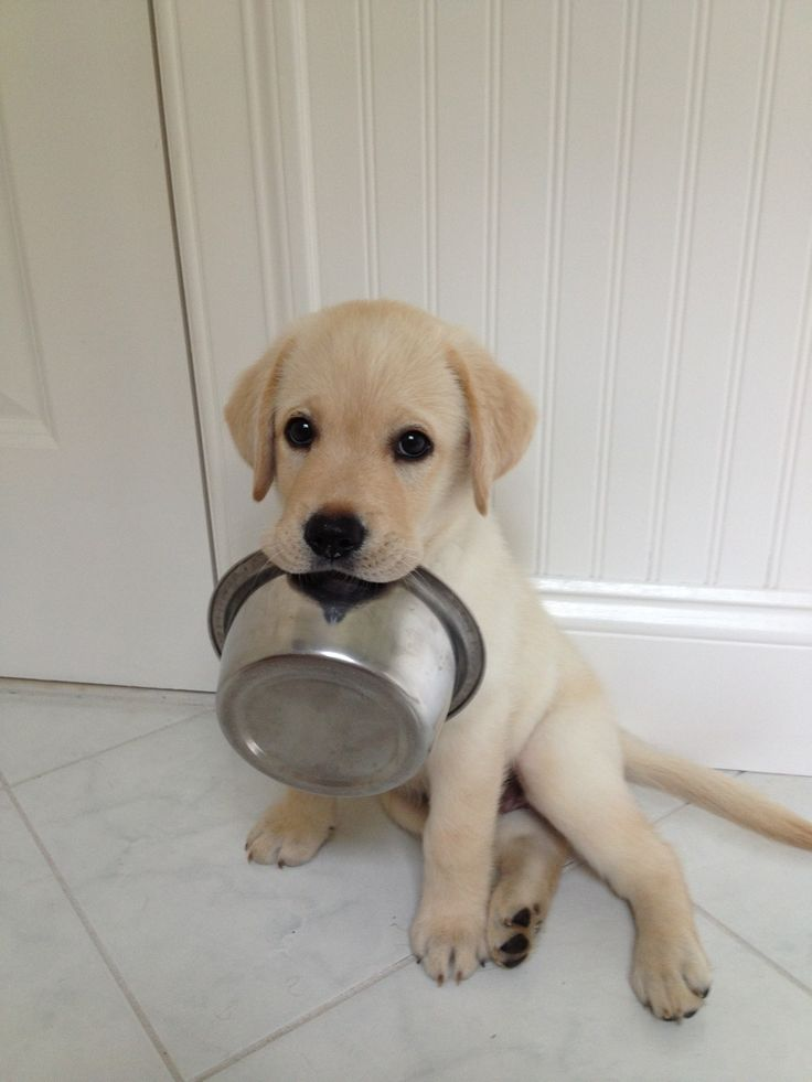 Feed me. So cute. Ours bang their charms on the bowls to let us know that they need food or water.: Animals, Puppies, Dogs, So Cute, Pets, Puppys, Adorable, I M Hungry