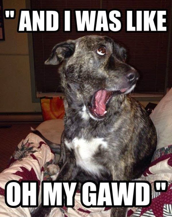 Fun Claw - Funny Cats, Funny Dogs, Funny Animals: Funny Cats And Dogs - 22 Pics: Funny Animals, Dogs, Funnyanimal, Funny Stuff, Funnies, Humor