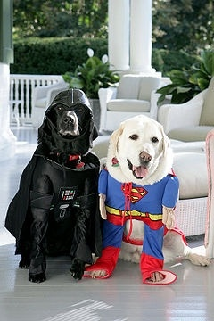 Fun dog costumes like Big Dogs in Costume and On Parade let you celebrate Halloween with man's best friend.: Darth Vader, Animals, Dogs, Halloween Costumes, Pet, Dog Costumes, Labrador Retrievers, Happy Halloween